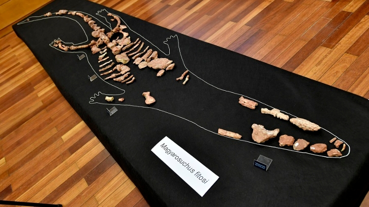 180 Million Year Old Crocodile To Go On Show