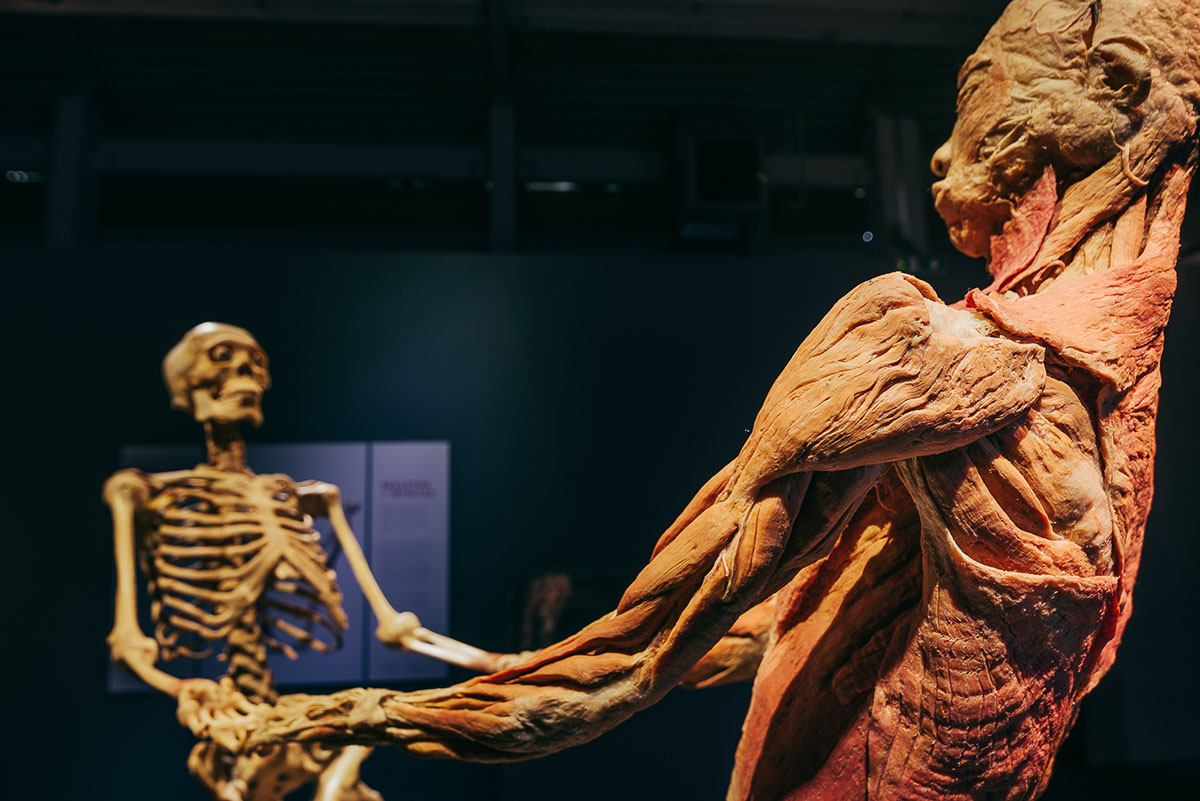 Xpat Review: The Body Exhibit In Budapest
