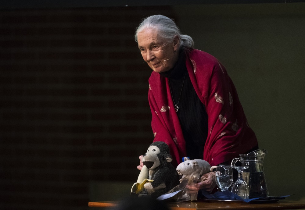 Video: 'Chimpanzee Mama' Dr. Jane Goodall Speaks In Budapest
