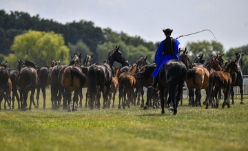 Video: Hungarian Csikós Proceeded Cowboys