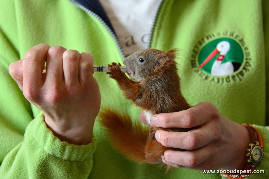 Animal Rescue Centre Opened @ Budapest Zoo
