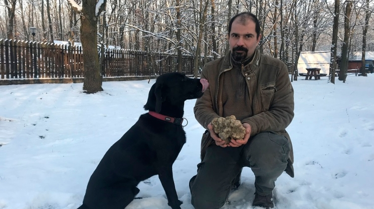 Record-Size White Truffle Found In S Hungary