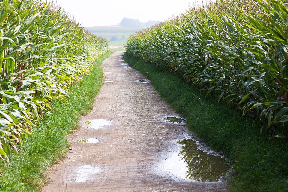 Video: Maize Field Maze Now Open