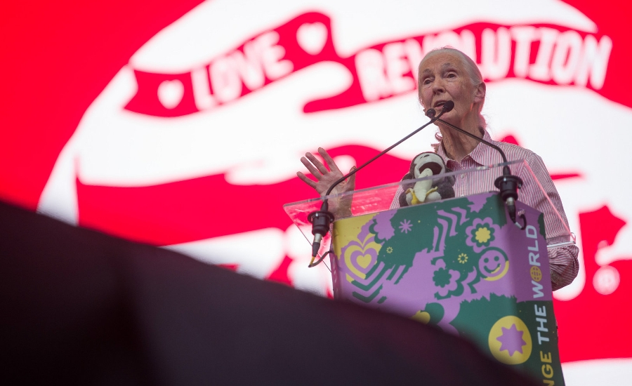 "Video: Jane Goodall, UN Peace Messenger, Interviewed By British Ambassador Lindsay At Sziget ""Love Revolution"" In Budapest"