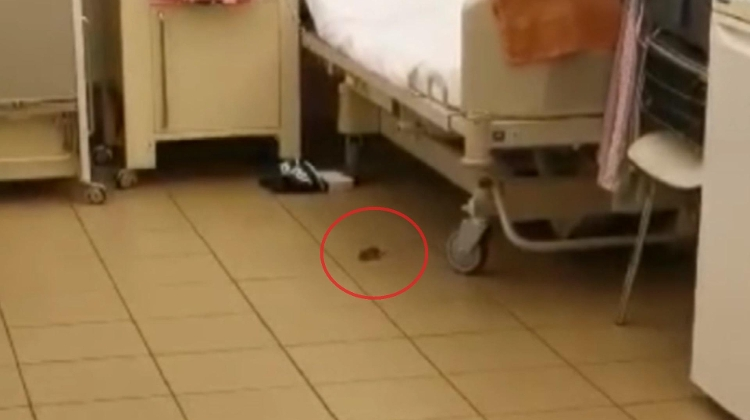 Hospital Mouse Becomes TV Star In Hungary