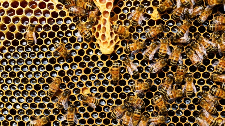 Hungary To Boost Support For Beekeepers By 25%