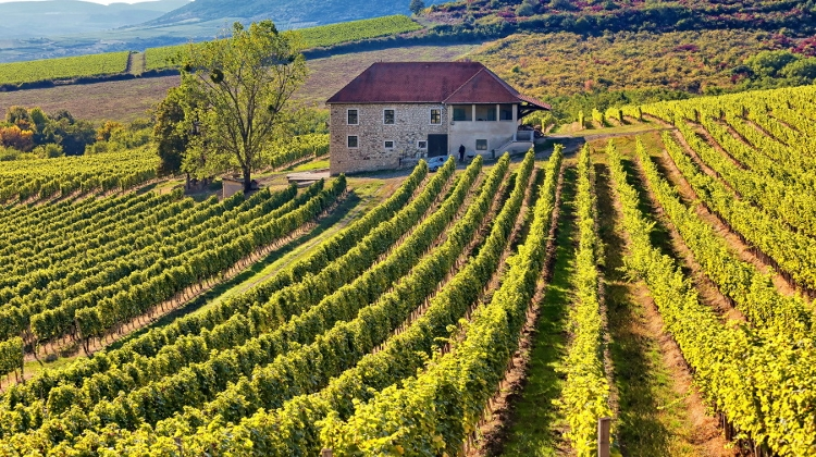 Globetrotting Wine Writers Tackle Hungary: Unsung Hero In Old World Of Wine