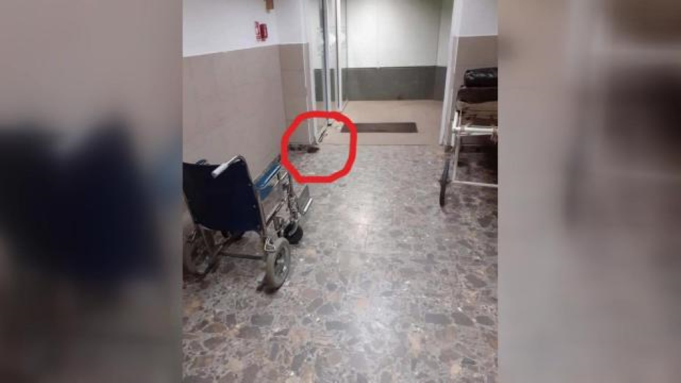 Rat Seen In Hungarian Hospital Corridor