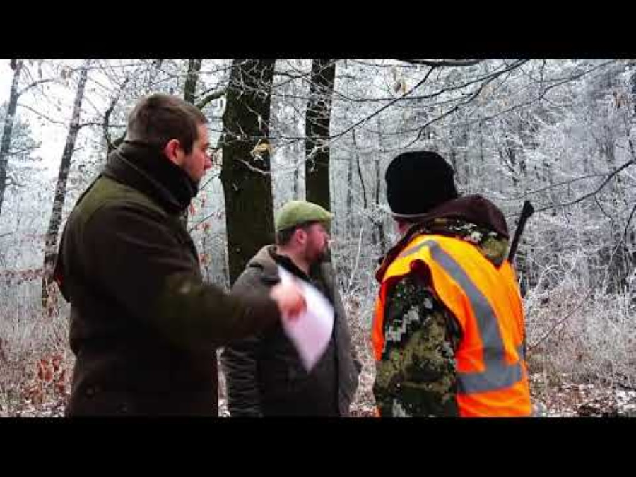 Video: Wild Boar Hunting In Hungary