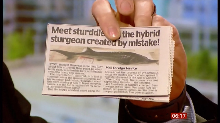 Video: Hungarian Scientists Create New Hybrid Fish - By Accident
