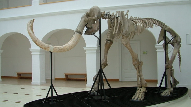 3 Top Places In Hungary Featuring Fascinating Prehistoric Fossils