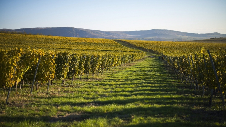 Xploring Hungary Video: Tokaj Region