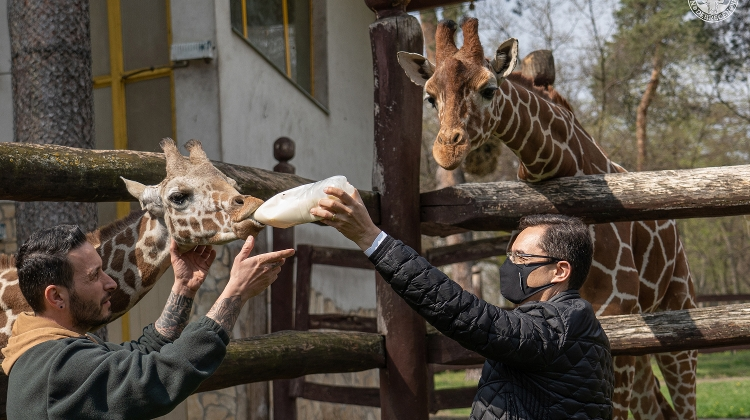 Debrecen Zoo & Amusement Park Welcomes New Residents On Earth Day In Hungary