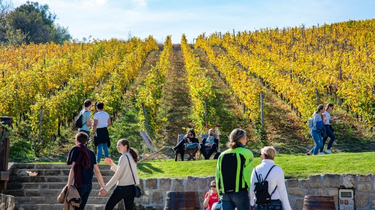 Watch: Xploring Wine Districts Of Hungary – Etyek & Buda
