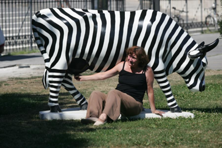 'Cow Parade' in Budapest