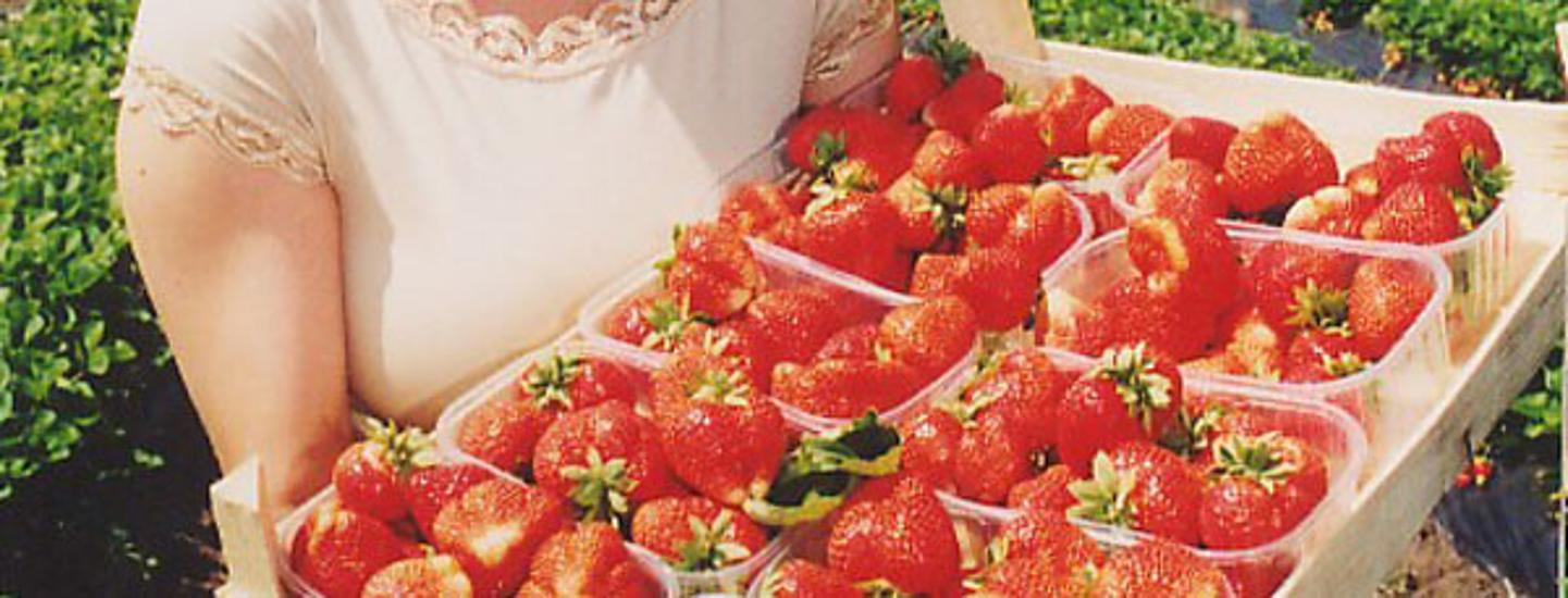 Invitation: Strawberry Festival, Tahitóthfalu, Hungary, 8 - 10 June