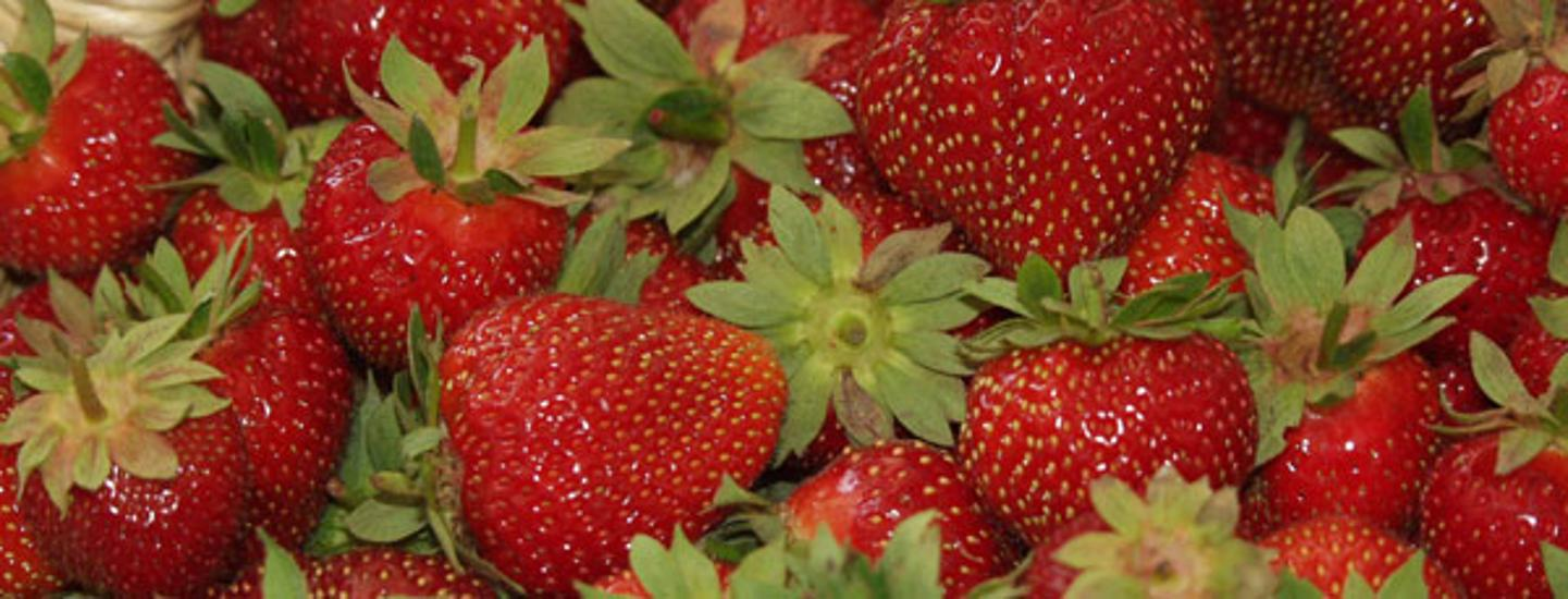 Invitation: Strawberry Festival, Tahitótfalu, Hungary, 5 - 7 July