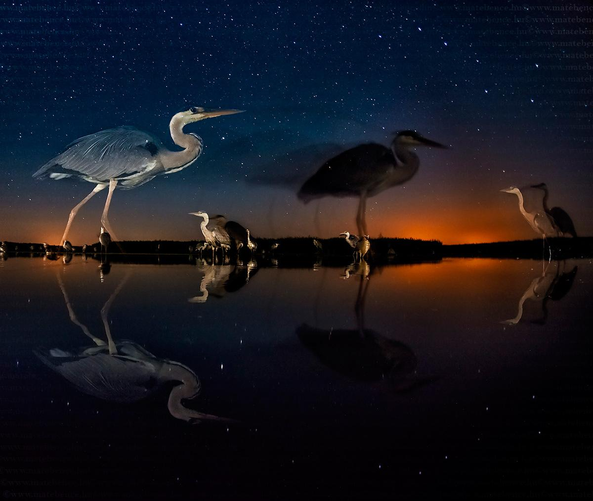 Hungarian Photographer Bence Máté Wins Wildlife Photography Competition