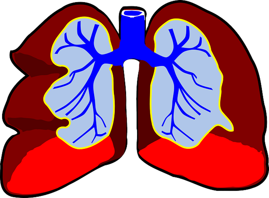 Hungary Can Start Lung Transplants