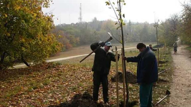 Tree Planted For Every Newborn In Hungary