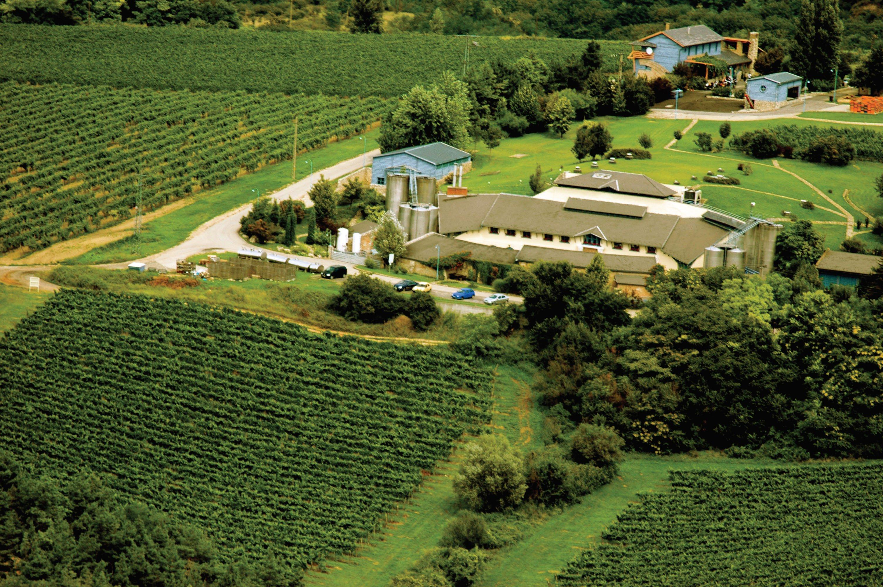 Introducing Hilltop Winery From Neszmély