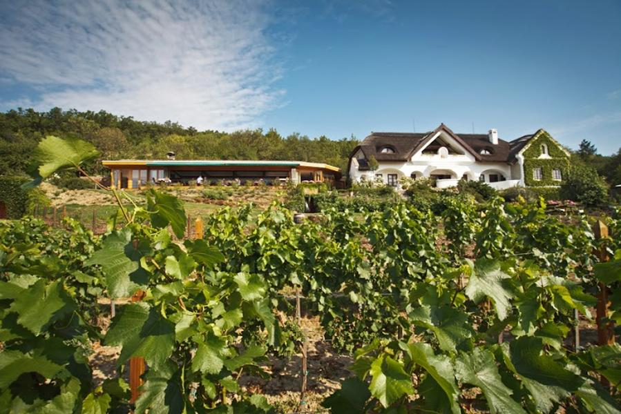 Introducing Hungary's St. Donat Winery