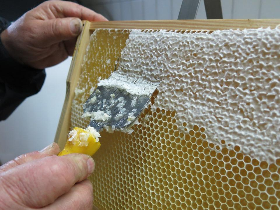 Beekeepers To Launch Campaign Promoting Honey