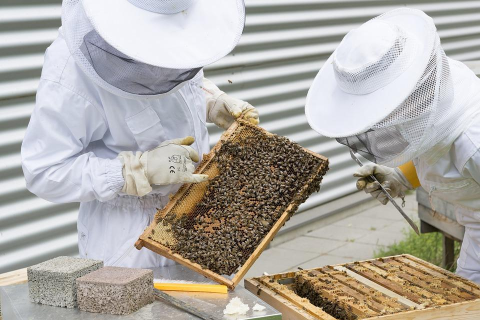 Beekeepers To Receive Support